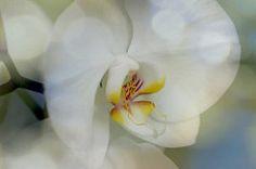 Zen Orchid for Macro Mondays