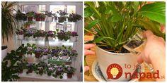 Hubár z dediny mi poradil geniálny tip, vďaka ktorému porastú vaše izbovky ako divé: Tento životabudič vám rastie pod nohami! Korn, Gardening, Flowers, Plants, Garten, Lawn And Garden, Royal Icing Flowers, Flower, Florals