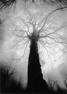 I'm just blown away by the beauty that this photograph gives off. Mysterious, yet tranquil at the same time