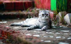 Картинки по запросу кот лежит у стены