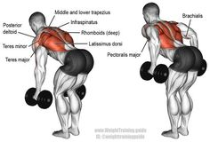 Bent over two arm dumbbell row. A major compound exercise! Target muscle: None. Multiple back, arm, and shoulder muscles work synergistically. Synergistic muscles: Latissimus Dorsi, Teres Major, Posterior Deltoid, Middle and Lower Trapezius, Rhomboids, Infraspinatus, Teres Minor, Brachialis, Brachioradialis, and Sternal (Lower) Pectoralis Major. The Biceps Brachii and the Long Head of the Triceps Brachii act as dynamic stabilizers.