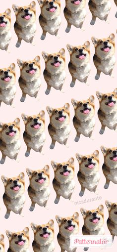 78 Best Cute Dog Phone Wallpapers Images In 2019 Kawaii Wallpaper