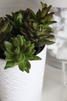 How to Make a Faux Succulent Pen Planter | eHow