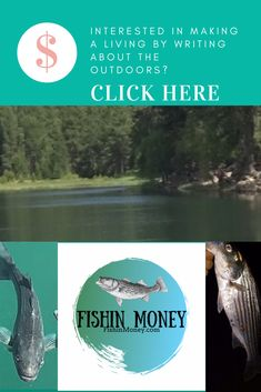 Fishin Money – Striped Bass Tips. - Real Time - Diet, Exercise, Fitness, Finance You for Healthy articles ideas Sport Fishing, Bass Fishing, Crappie Fishing, Fishing Rods, Fishing Times, Offshore Fishing, Get Outdoors, Fishing Humor, Money