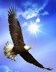 Screaming Eagle Wallpaper Birds Animals Wallpapers) – Wallpapers and Backgrounds Eagle Images, Eagle Pictures, Bird Pictures, Animal Pictures, Pictures Of Bald Eagles, Beautiful Birds, Animals Beautiful, Beautiful Life, Animals And Pets