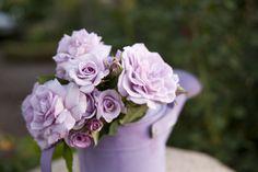 Rose Ramber - Gra's Blue