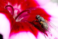 Macro photography, fly 2014