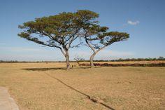 Twee bomen in een onmetelijk land