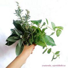 """""""Mi piace"""": 47, commenti: 6 - Vanessa 🌼 Cosmesi Naturale (@naturalia_segretidibellezza) su Instagram: """"🌱Il Tonico: step semplice ma da NON sottovalutare.🌱 ⠀⠀⠀⠀⠀⠀⠀⠀⠀ Nella skincare routine, dopo la…"""" Routine, How To Start A Blog, How To Make, Herbs, Skin Care, Instagram, Plants, Things To Sell, Skincare Routine"""