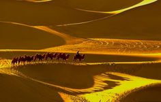 Landscapes Photography - Leading the Camel - Travel