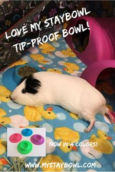 """""""Pixel still loves her STAYbowl! This has seriously been one of the best products I've ever purchased for them. No wasted food. Ever. She and her sister also like to use it as a pillow!"""""""