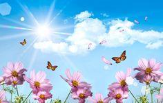 Fond D Ecran Printemps Papillon