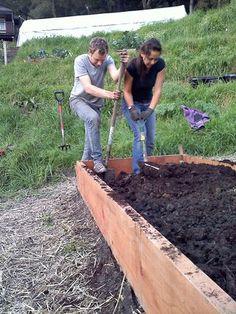 Double Digging, check it out at Love Apple Farms, Santa Cruz CA