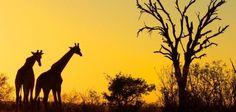 Hôtel Afrique du Sud : Lebombo Lodge - Afrique - 10