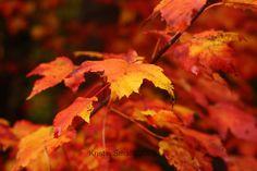 Fall, NH 2009 | Flickr - Photo Sharing!
