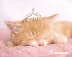 Lizzy (Moggy Doll) - Sleeping beauty (pic by Rachael Hale)