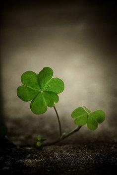 .i feel lucky like a 4 leaf clover.....