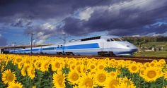 Fastest trains on the track. (Pic of High speed train traveling through the French countryside)