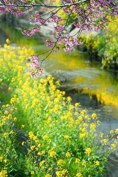 wild stream laced with yellow