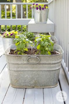 Container Gardening For Beginners Vintage Galvanized Wash Tub Herb Garden Growing Ginger Indoors, Growing Herbs, Container Herb Garden, Container Plants, Plant Containers, Herbs Garden, Container Design, Gardening For Beginners, Gardening Tips