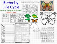 Many different activities to fill up your unit on the butterfly life cycle!- sequence cards (color and black/white)- recording sheet to write the sequence of the butterfly life cycle- life cycle illustration sheet: Use pasta for the fun of it! - If I Were a Butterfly...