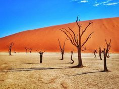 🇳🇦 Namibia, Dec 2016:  Is this a photo or a surrealist painting? Or is it a glimpse of life on another world?  Among the towering red dunes of the central Namib desert lies a strange and alien landscape.  According to @atlasobscura, 900 years ago the climate dried up and it became too dry for the trees to even decompose. They simply scorched black in the sun, monuments to their own destruction.  The trees, now over 1000 years old, form an alien forest of ominous art forever cast in the…