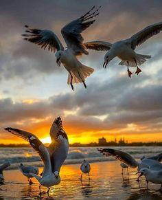A imagem pode conter: céu, pássaro, nuvem, atividades ao ar livre e água Beautiful Birds, Animals Beautiful, Nature Pictures, Animal Pictures, Seagulls Flying, Photo Animaliere, All Birds, Wild Nature, Beach Art