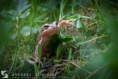 Frog.  #wildlifephotography Wild Animals, Wildlife Photography, Pictures, Wild Ones, Nature Photography
