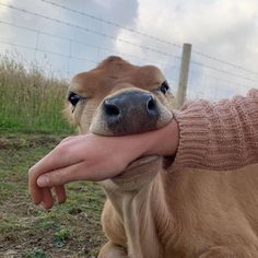 Cute Baby Cow, Baby Cows, Cute Cows, Baby Farm Animals, Cute Little Animals, Cute Funny Animals, Cute Creatures, Beautiful Creatures, Animal Pictures