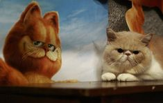 Choosing pets - A List of Great Cat Movies for Children Dogs need to be given time to walk around and can not be left alone for a weekend. Cats do not need to go outside and can be alone for up to three days.