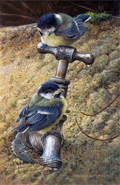 Painting by British Wildlife artist and naturalist Andrew Hutchinson:
