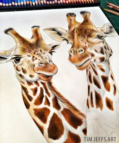 "More progress on my Giraffes.  My Coloring Book, ""Intricate Ink Animals In…"
