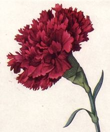 Floral emblem - Wikipedia, the free encyclopedia