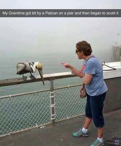 I'm sure that pelican felt ashamed.