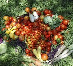 Raised bed gardens produce a cornucopia of gorgeous goodness, and they're so easy to build and maintain! ~ Easy Edible Landscapes Miami