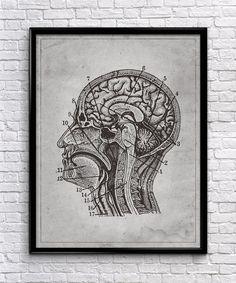 brain anatomy vintage wall art human anatomy vintage anatomy home decor office decor printable instant download anatomy home office