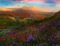 https://flic.kr/p/VBKHEU   Sunset Reds Above The Majestic Mt St Helens_720_2