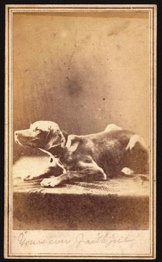 Alexander Gardner Civil War period CDV of a dog with 3 c stamp RARE image!