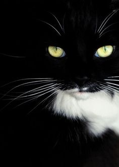 """""""Cats are mysterious folk.  There is more passing in their minds than we are aware of."""" --Sir Walter Scott"""