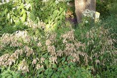 http://shop.unquadratodigiardino.it/graminacee-e-erbe-ornamentali-da-ombra/18-chasmanthium-latifolium.html