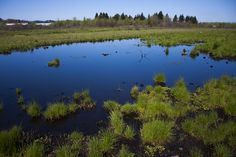 fighting for wetlands. www.envisionjournalism.com