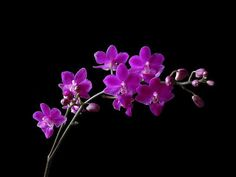 orchids wallpaper - Google Search