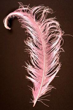 Plume d'autruche! env. 50 cm, standard, 1 pc ! rose