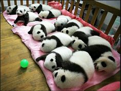 Sleepover!  I want one.