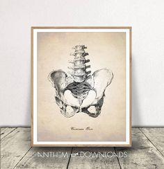 Pelvic Bone Print Human Anatomy Art Human Pelvis Printable