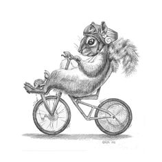 Squirrel on a recumbent bicycle