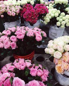 Flowers flowers! Happy Saturday! Xo
