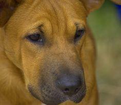 https://flic.kr/p/KjWHk5 | Dog Face | Up close and personal... Beautiful animal !