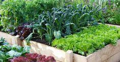 Ein Hochbeet bietet Gemüse optimale Wachstumsbedingungen und erleichtert die Gartenarbeit. Diese 10 Tipps sollten Sie bei der Planung, dem Bau und