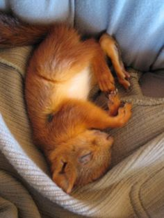 Injured Baby Squirrel Joins the Family of the People Who Rescued Him - My Modern Met